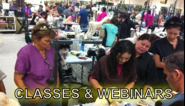 Classes & Webinars